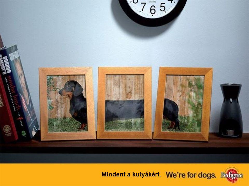 Mindent a kutyákért.