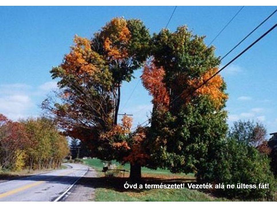 Óvd a természetet! Vezeték alá ne ültess fát!