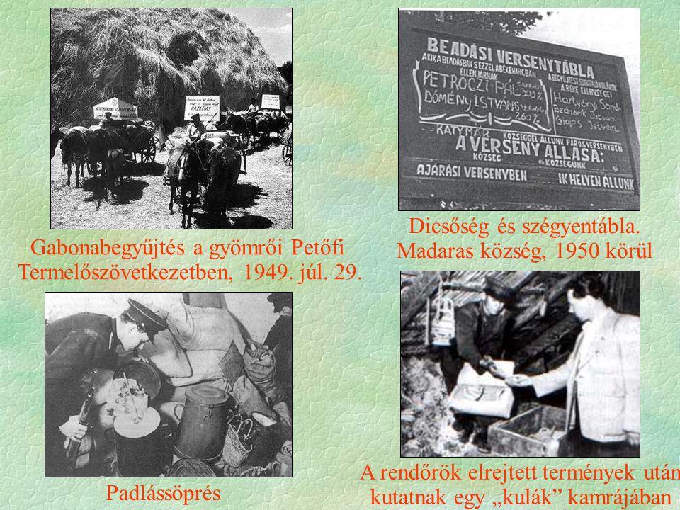 Gabonabegyűjtés a gyömrői Petőfi Termelőszövetkezetben, 1949.