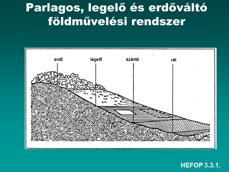 HEFOP 3.3.1. Parlagos, legelő és erdőváltó földművelési rendszer