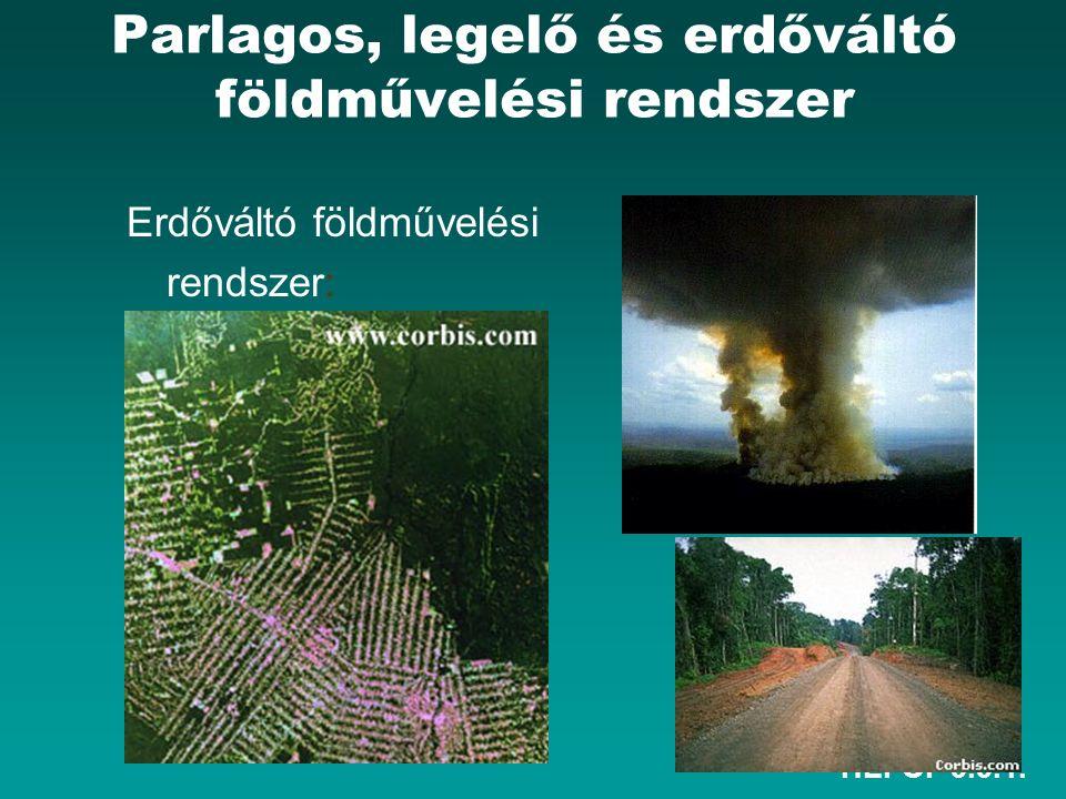 HEFOP 3.3.1. Parlagos, legelő és erdőváltó földművelési rendszer Erdőváltó földművelési rendszer: