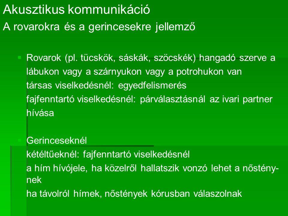 Akusztikus kommunikáció A rovarokra és a gerincesekre jellemző   Rovarok (pl.