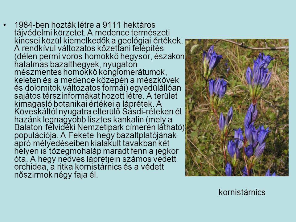 1984-ben hozták létre a 9111 hektáros tájvédelmi körzetet. A medence természeti kincsei közül kiemelkedők a geológiai értékek. A rendkívül változatos