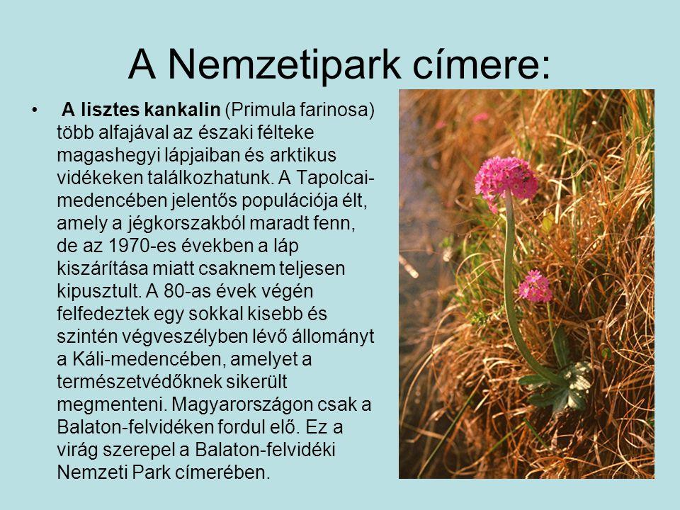 A Nemzetipark címere: A lisztes kankalin (Primula farinosa) több alfajával az északi félteke magashegyi lápjaiban és arktikus vidékeken találkozhatunk
