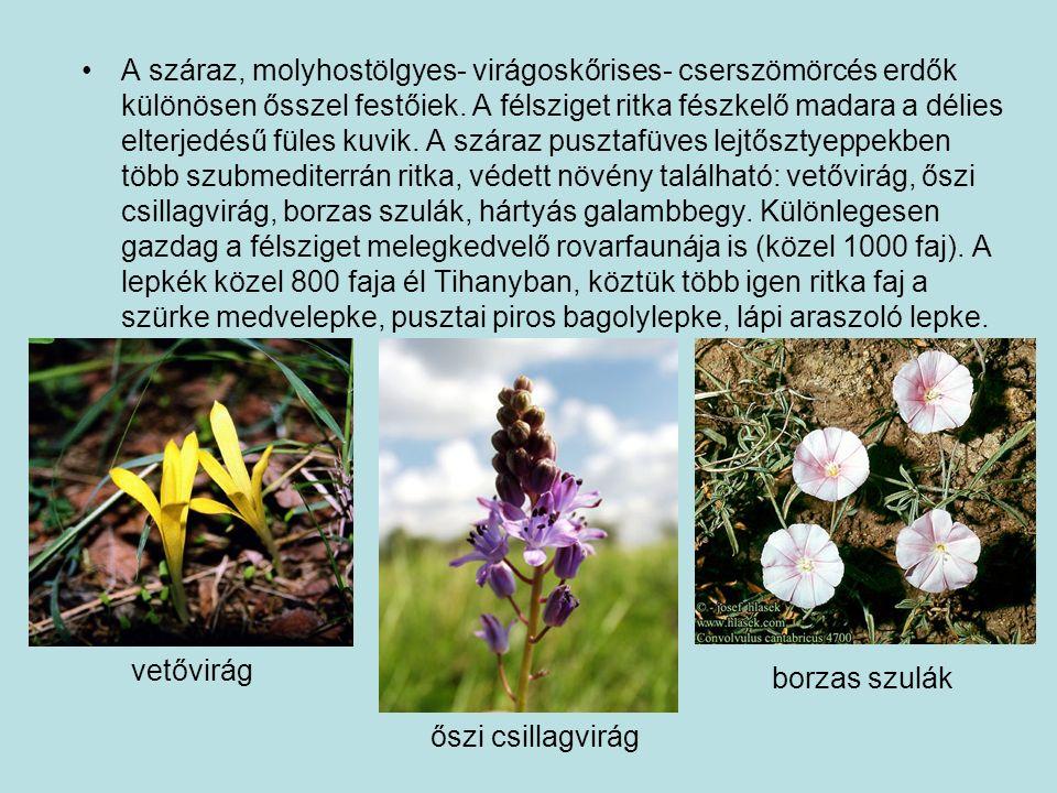 A száraz, molyhostölgyes- virágoskőrises- cserszömörcés erdők különösen ősszel festőiek.