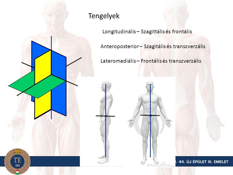 Az emberi test síkjai Transzverzális v. vízszintes Szagittális v.