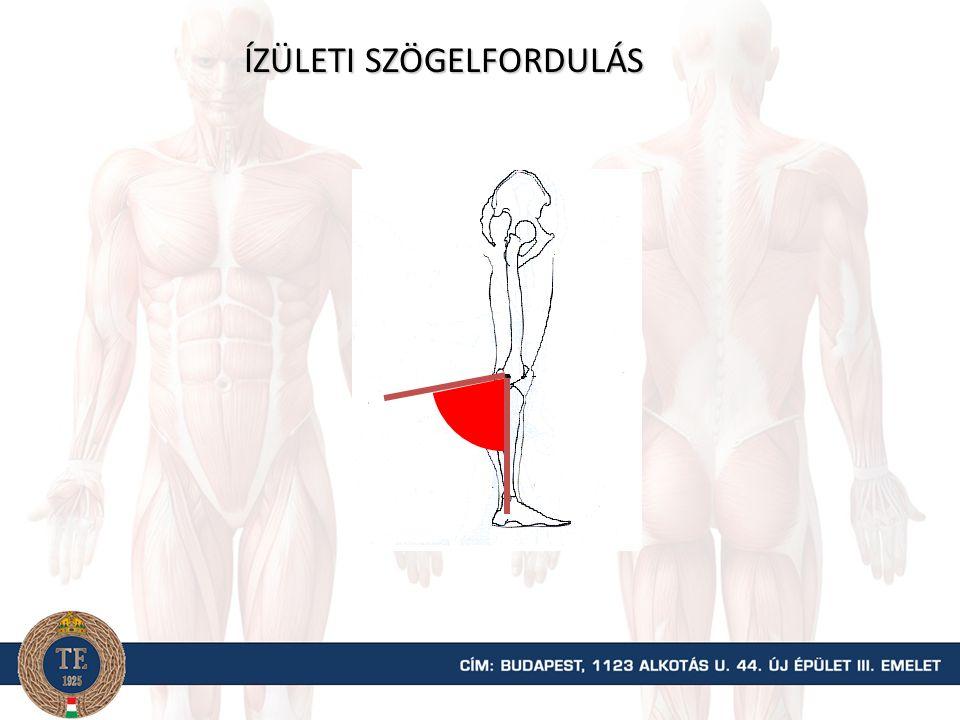 Kiegészítő (belső) 180° Ízületi szög Anatómiai (külső) 0° Kiegészítő (belső) 100° Anatómiai (külső) 80°