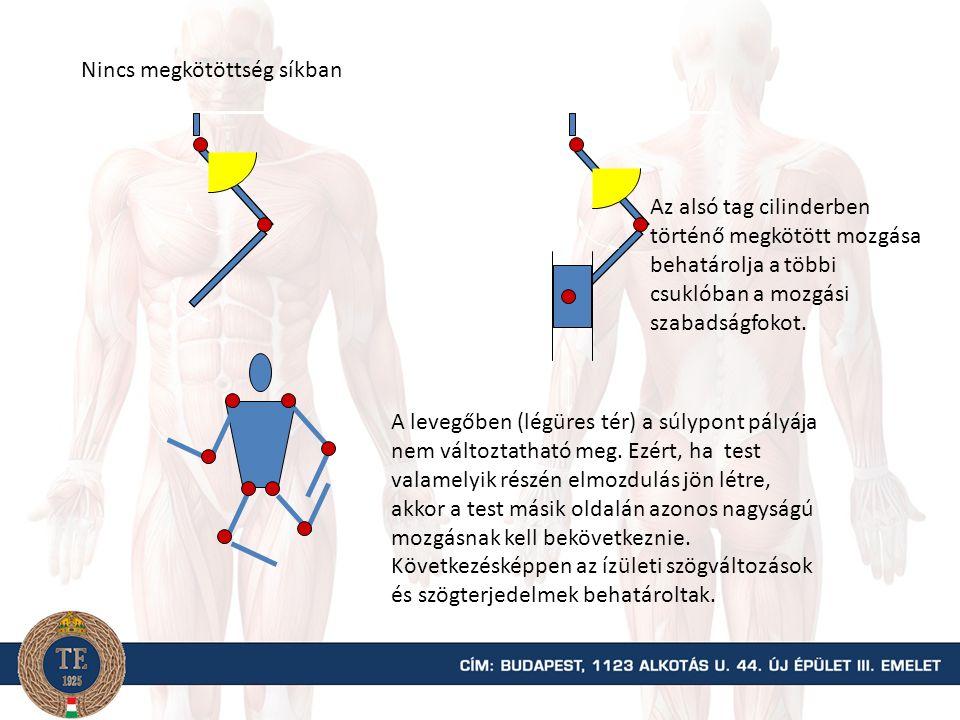 Megkötöttség Anatómiai adjunctus (független) Conjunctus vagy összekötött ( az izületek mozgása egymástól függ)