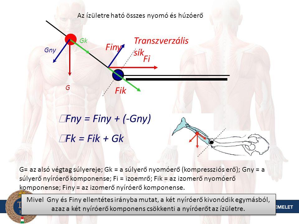 Transzverzális sík G Gny Gk A végtag súlypontja feljebb helyezkedik el,mint a forgás középpontja G= az alsó végtag súlyereje; Gk = a súlyerő nyomóerő (kompressziós erő) komponense; Gny = a súlyerő nyíróerő komponense