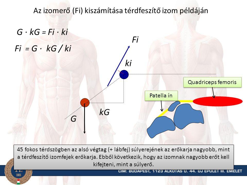 Erőmérés könyökhajlítók példáján és a forgatónyomatékok kiszámítása M = Fmért k FiFi Fmért kiki ki Fmért k = Fi ki Fi = Fmért k / ki k Mi = Fi ki Biceps brachii Brachioradialis Brachialis Erőmérő Amennyiben az erőmérő huzalát merőleges az alkar hosszúsági tengelyére, akkor a mért erő erőkarja egyenlő a rögzítés helye és az ízületi forgástengely közötti távolsággal, mivel a két egyenes merőleges egymásra.