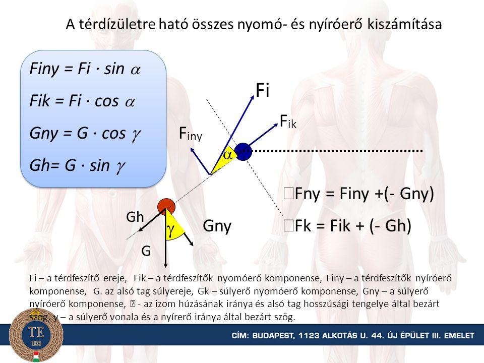 Az Fi erő nyomó- és nyíróerő komponens értékek kiszámítása G FiFi Fi = FG · kG / ki Fik  Finy Fik = Fi · cos  = Fi · sin  Fik – az izom által kifejtett erő nyomó vagy kompressziós (k) erő komponense; Finy - az izom által kifejtett erő nyíróerő (ny) komponense