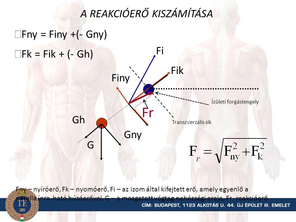 A térdízületre ható összes nyomó- és nyíróerő kiszámítása G FiFi F ik F iny Fik = Fi · cos  = Fi · sin  Gny GhGh = G · cos  Gh= G · sin   Fny = Finy +(- Gny)  Fk = Fik + (- Gh)   Fi – a térdfeszítő ereje, Fik – a térdfeszítők nyomóerő komponense, Finy – a térdfeszítők nyíróerő komponense, G.