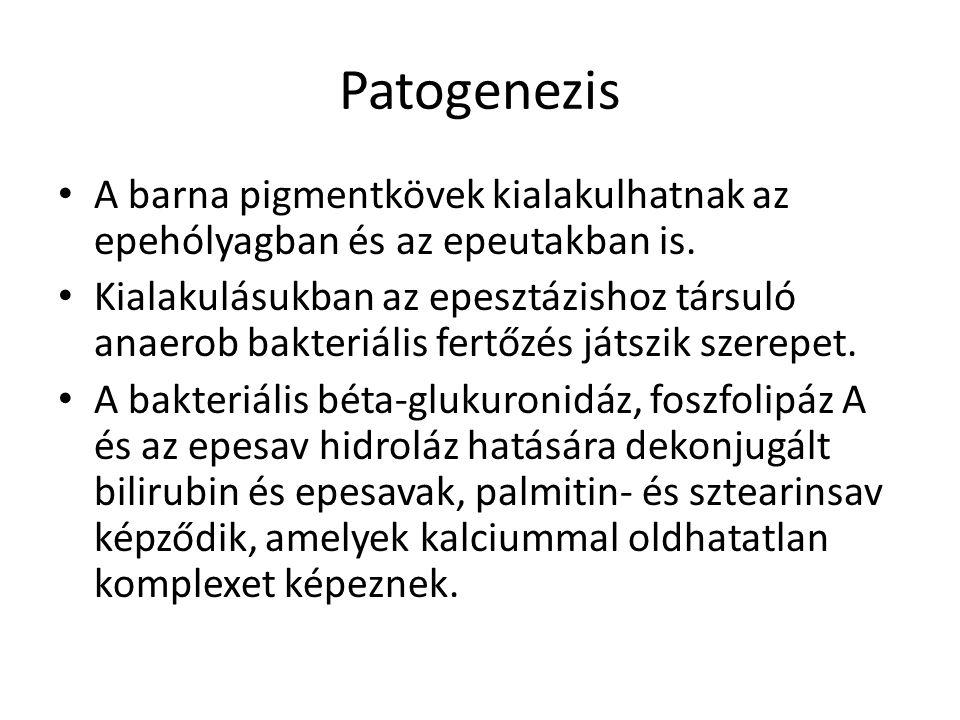 Patogenezis A barna pigmentkövek kialakulhatnak az epehólyagban és az epeutakban is.