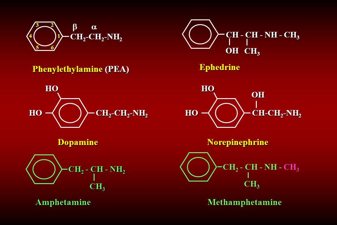 CH 2 - CH - NH 2 Amphetamine CH 3 CH 2 -CH 2 -NH 2 DopamineHOHO CH - CH - NH - CH 3 Ephedrine OH CH 3 4   CH 2 -CH 2 -NH 2   CH 2 -CH 2 -NH 21 23 56 Phenylethylamine (PEA) CH-CH 2 -NH 2 NorepinephrineHOHO OH CH 2 - CH - NH - CH 3 Methamphetamine CH 3