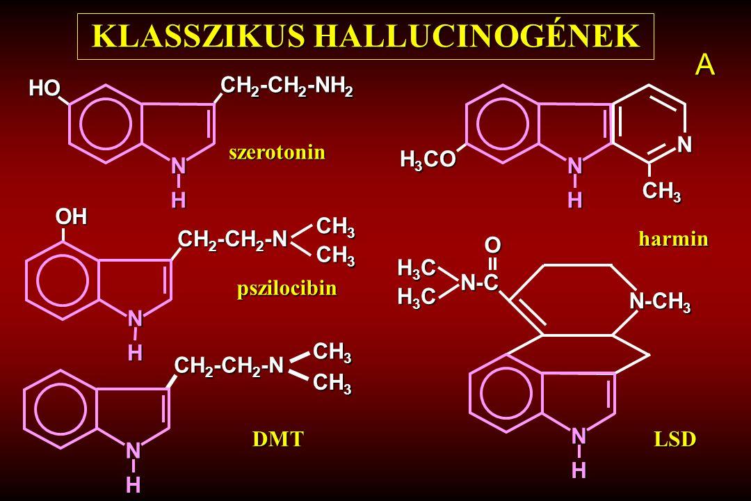 HO N H CH 2 -CH 2 -NH 2 KLASSZIKUS HALLUCINOGÉNEK N H H 3 CO N CH 3 N H OH CH 2 -CH 2 -N CH 3 N H N-CH 3 H3CH3CH3CH3C H3CH3CH3CH3C N-C O N H CH 2 -CH 2 -N CH 2 -CH 2 -N CH 3 DMTLSD pszilocibin szerotonin harmin A