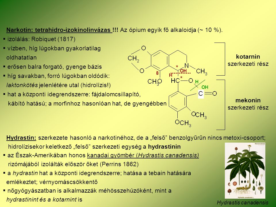 Narkotin: tetrahidro-izokinolinvázas !!. Az ópium egyik fő alkaloidja (~ 10 %).