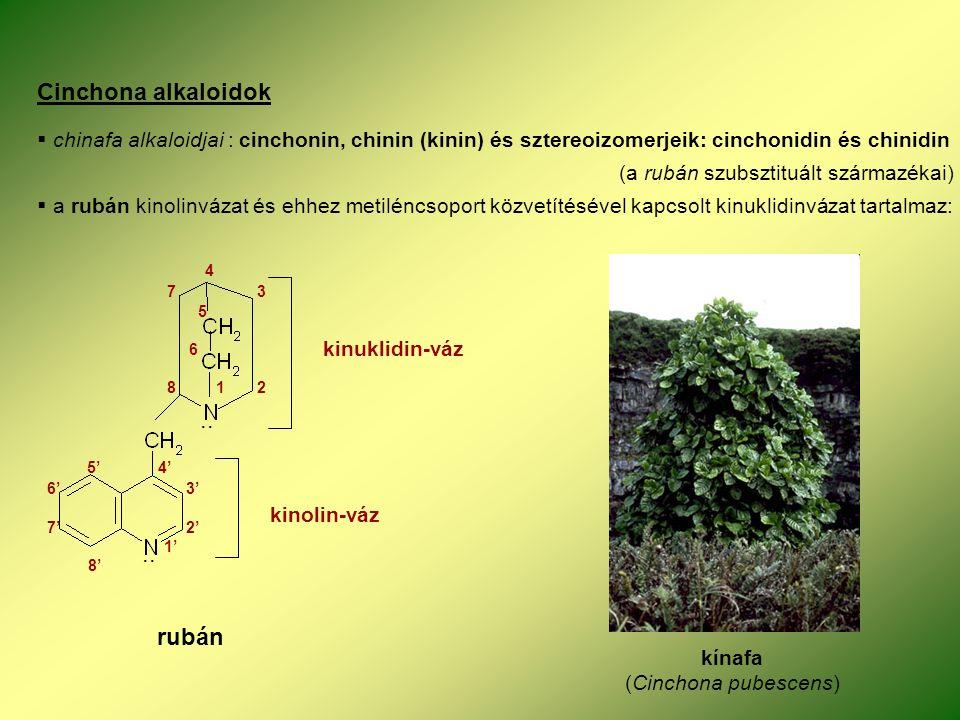 Cinchona alkaloidok  chinafa alkaloidjai : cinchonin, chinin (kinin) és sztereoizomerjeik: cinchonidin és chinidin (a rubán szubsztituált származékai)  a rubán kinolinvázat és ehhez metiléncsoport közvetítésével kapcsolt kinuklidinvázat tartalmaz: kínafa (Cinchona pubescens) rubán kinolin-váz kinuklidin-váz..