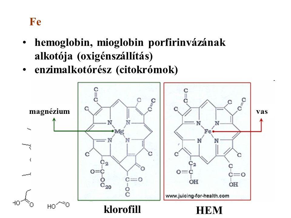 hemoglobin, mioglobin porfirinvázának alkotója (oxigénszállítás) enzimalkotórész (citokrómok) Fe citokróm-c klorofill HEM magnéziumvas