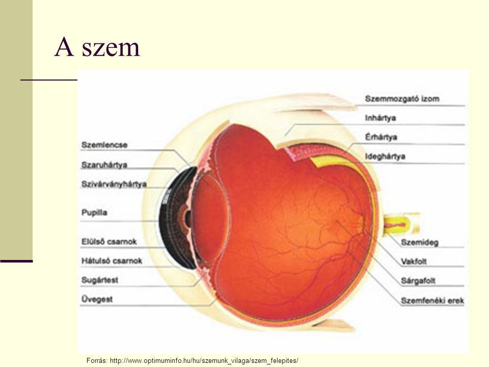 A szem Forrás: http://www.optimuminfo.hu/hu/szemunk_vilaga/szem_felepites/