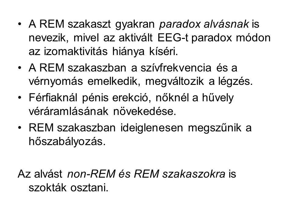 A REM szakaszt gyakran paradox alvásnak is nevezik, mivel az aktivált EEG-t paradox módon az izomaktivitás hiánya kíséri. A REM szakaszban a szívfrekv