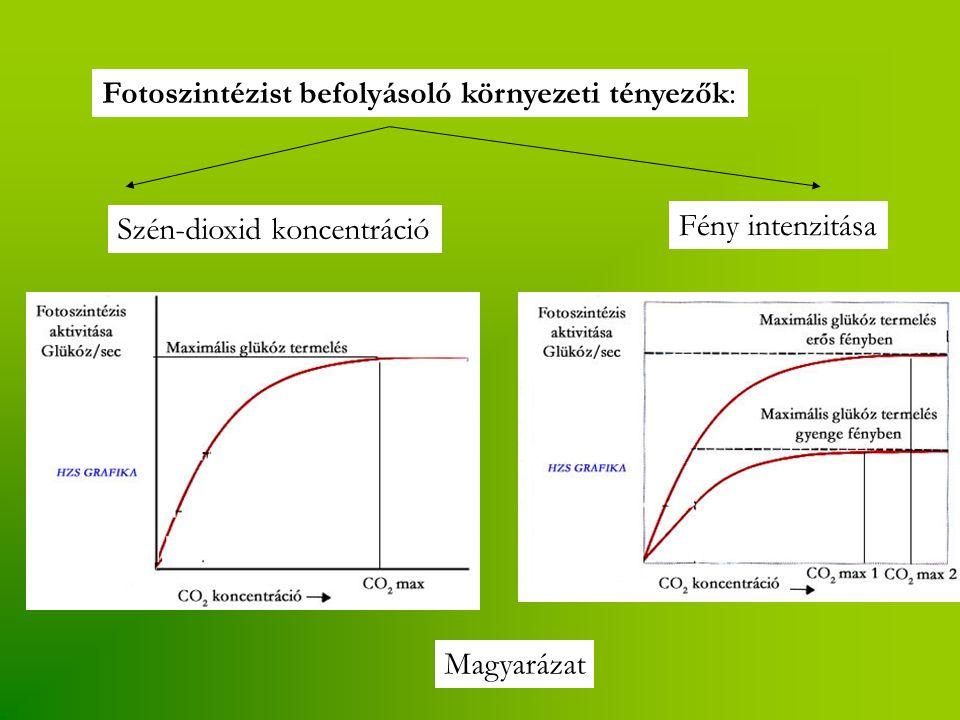 Fotoszintézist befolyásoló környezeti tényezők: Szén-dioxid koncentráció Fény intenzitása Magyarázat