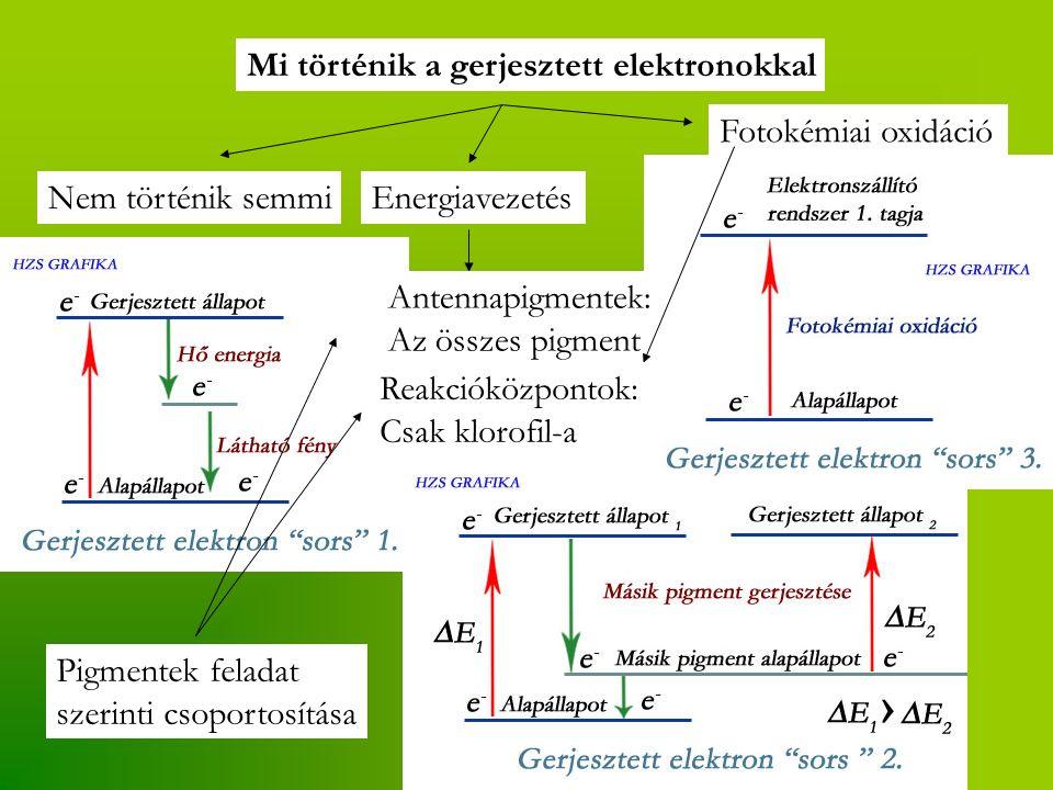 Mi történik a gerjesztett elektronokkal Nem történik semmiEnergiavezetés Fotokémiai oxidáció Antennapigmentek: Az összes pigment Reakcióközpontok: Csak klorofil-a Pigmentek feladat szerinti csoportosítása