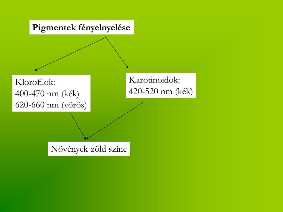 Pigmentek fényelnyelése Klorofilok: 400-470 nm (kék) 620-660 nm (vörös) Karotinoidok: 420-520 nm (kék) Növények zöld színe