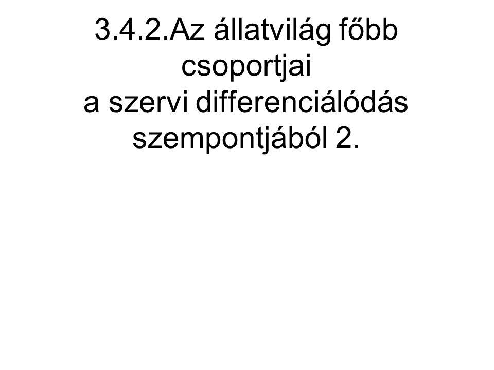 3.4.2.Az állatvilág főbb csoportjai a szervi differenciálódás szempontjából 2.