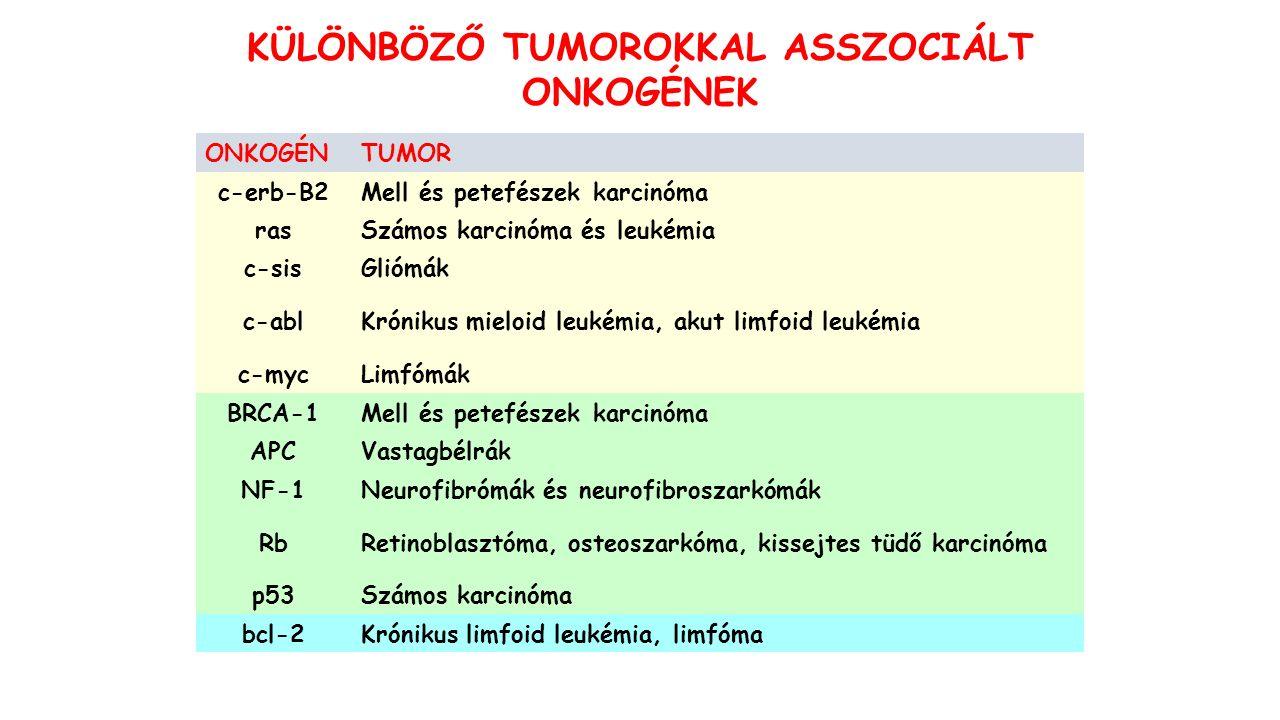 KÜLÖNBÖZŐ TUMOROKKAL ASSZOCIÁLT ONKOGÉNEK ONKOGÉNTUMOR c-erb-B2Mell és petefészek karcinóma rasSzámos karcinóma és leukémia c-sisGliómák c-ablKrónikus mieloid leukémia, akut limfoid leukémia c-mycLimfómák BRCA-1Mell és petefészek karcinóma APCVastagbélrák NF-1Neurofibrómák és neurofibroszarkómák RbRetinoblasztóma, osteoszarkóma, kissejtes tüdő karcinóma p53Számos karcinóma bcl-2Krónikus limfoid leukémia, limfóma