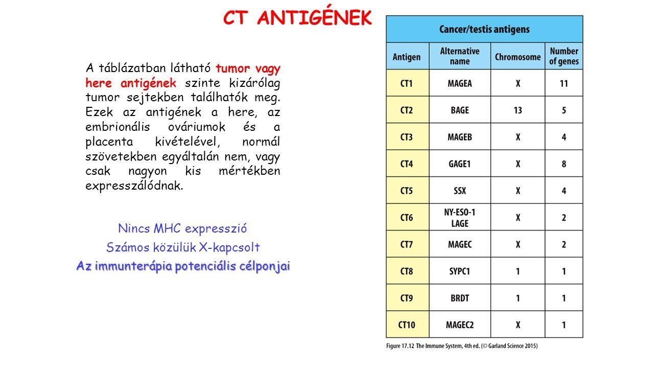 CT ANTIGÉNEK A táblázatban látható tumor vagy here antigének szinte kizárólag tumor sejtekben találhatók meg.