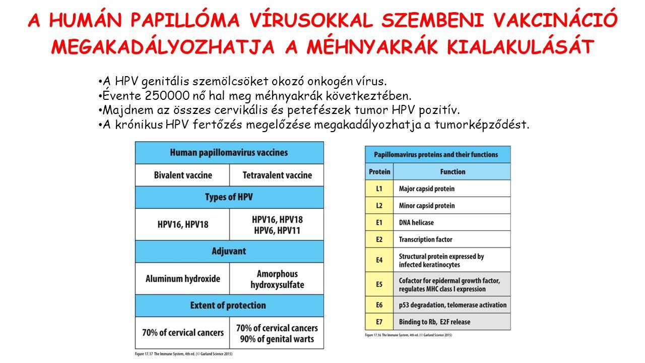A HUMÁN PAPILLÓMA VÍRUSOKKAL SZEMBENI VAKCINÁCIÓ MEGAKADÁLYOZHATJA A MÉHNYAKRÁK KIALAKULÁSÁT A HPV genitális szemölcsöket okozó onkogén vírus.