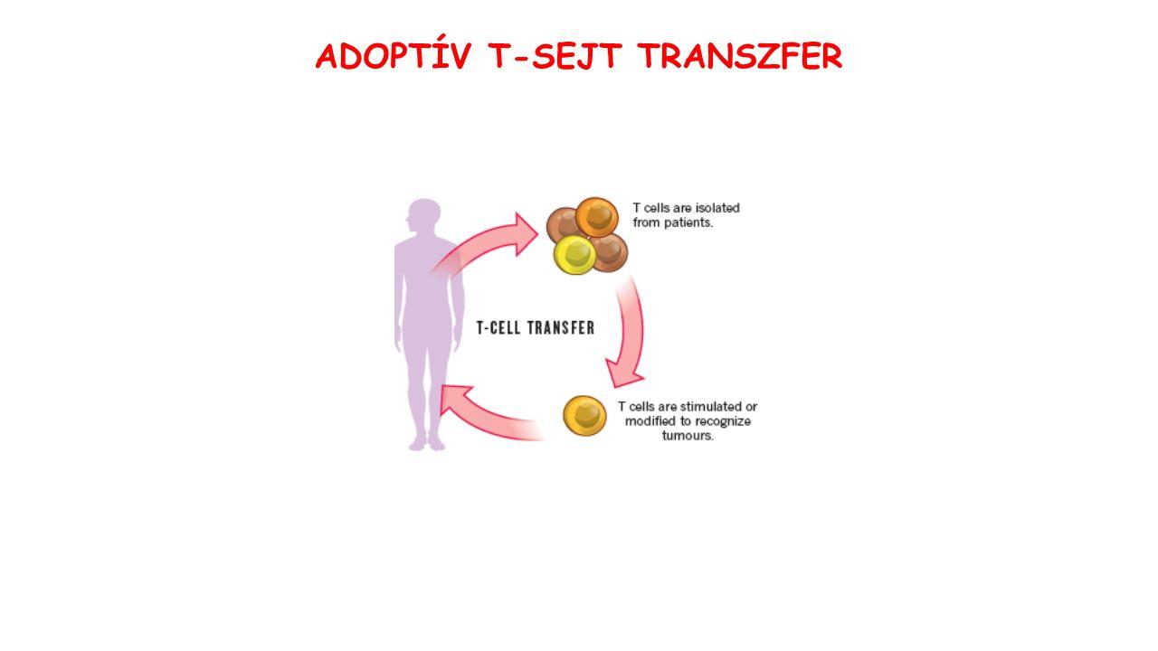 ADOPTÍV T-SEJT TRANSZFER