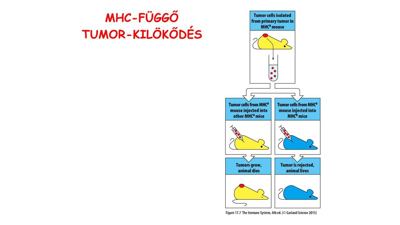MHC-FÜGGŐ TUMOR-KILÖKŐDÉS
