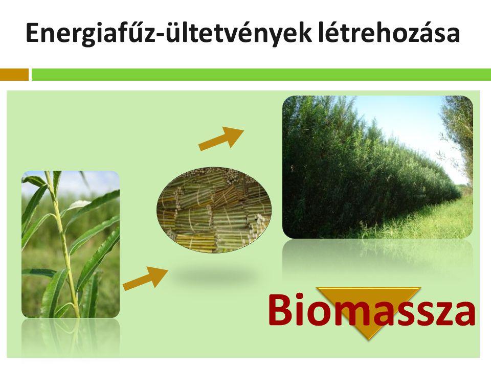 Energiafűz-ültetvények létrehozása Biomassza