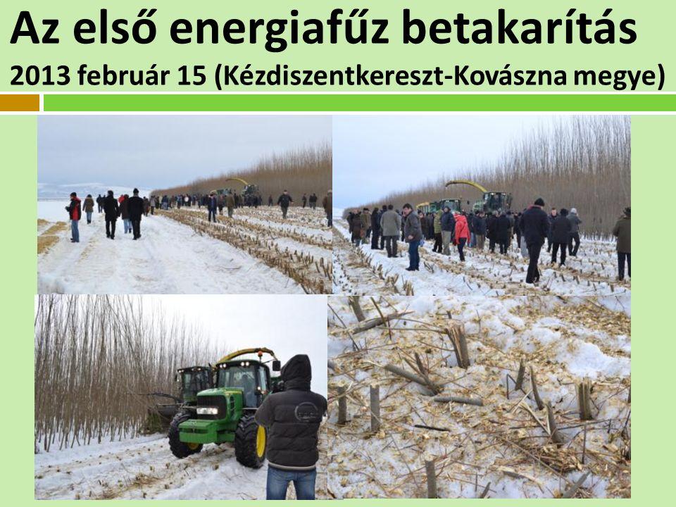 Az első energiafűz betakarítás 2013 február 15 (Kézdiszentkereszt-Kovászna megye)