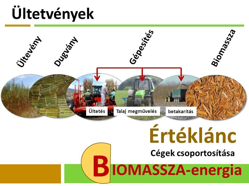 B IOMASSZA-energia Cégek csoportosítása Értéklánc Ültevény Dugvány Ültetés betakarítás Talaj megművelés Gépesítés Biomassza Ültetvények