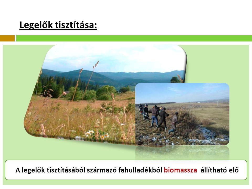 Legelők tisztítása: A legelők tisztításából származó fahulladékból biomassza állítható elő