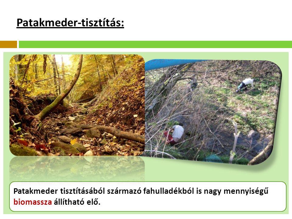 Patakmeder-tisztítás: Patakmeder tisztításából származó fahulladékból is nagy mennyiségű biomassza állítható elő.