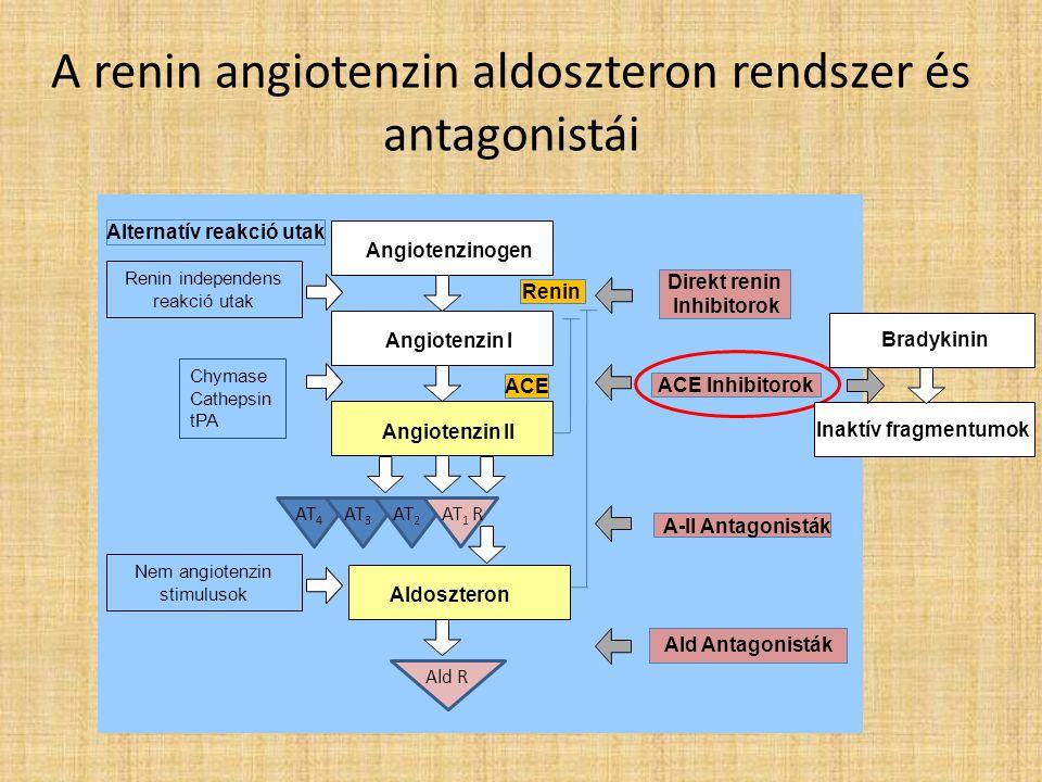 A renin angiotenzin aldoszteron rendszer és antagonistái Angiotenzinogen Angiotenzin I Angiotenzin II Aldoszteron A-II Antagonisták ACE Inhibitorok ACE Renin Ald Antagonisták Direkt renin Inhibitorok Alternatív reakció utak AT 4 AT 3 AT 2 AT 1 R Chymase Cathepsin tPA Nem angiotenzin stimulusok Renin independens reakció utak Ald R Bradykinin Inaktív fragmentumok