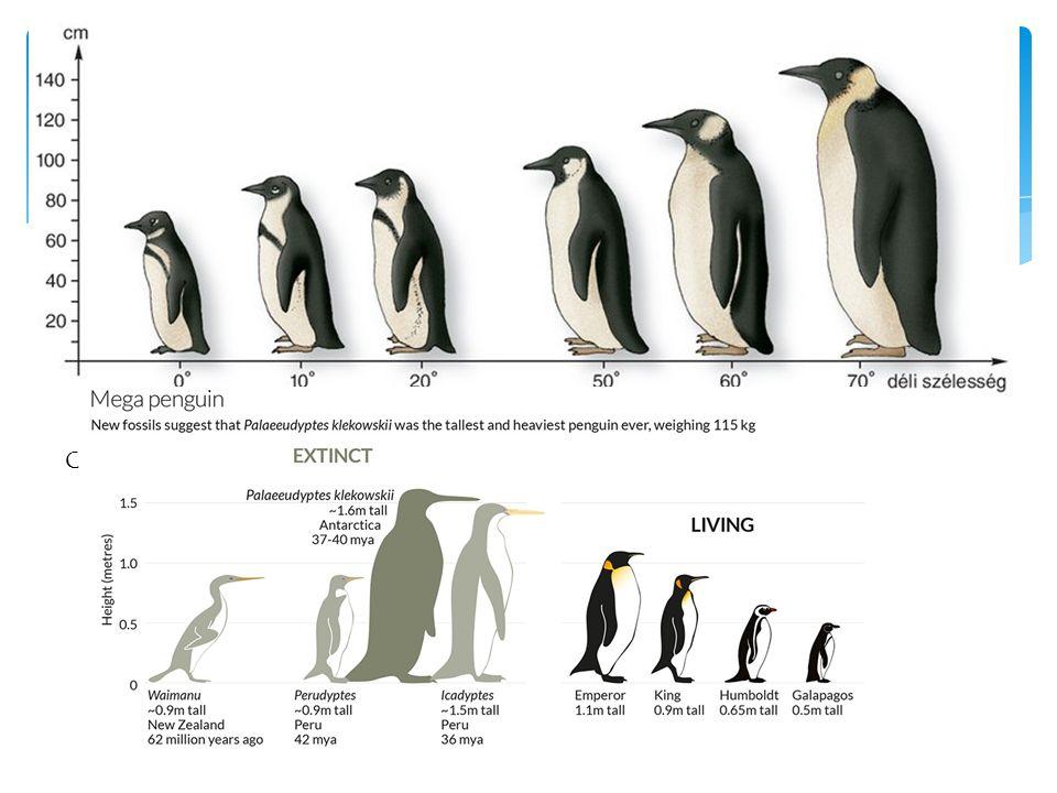 Császárpingvin