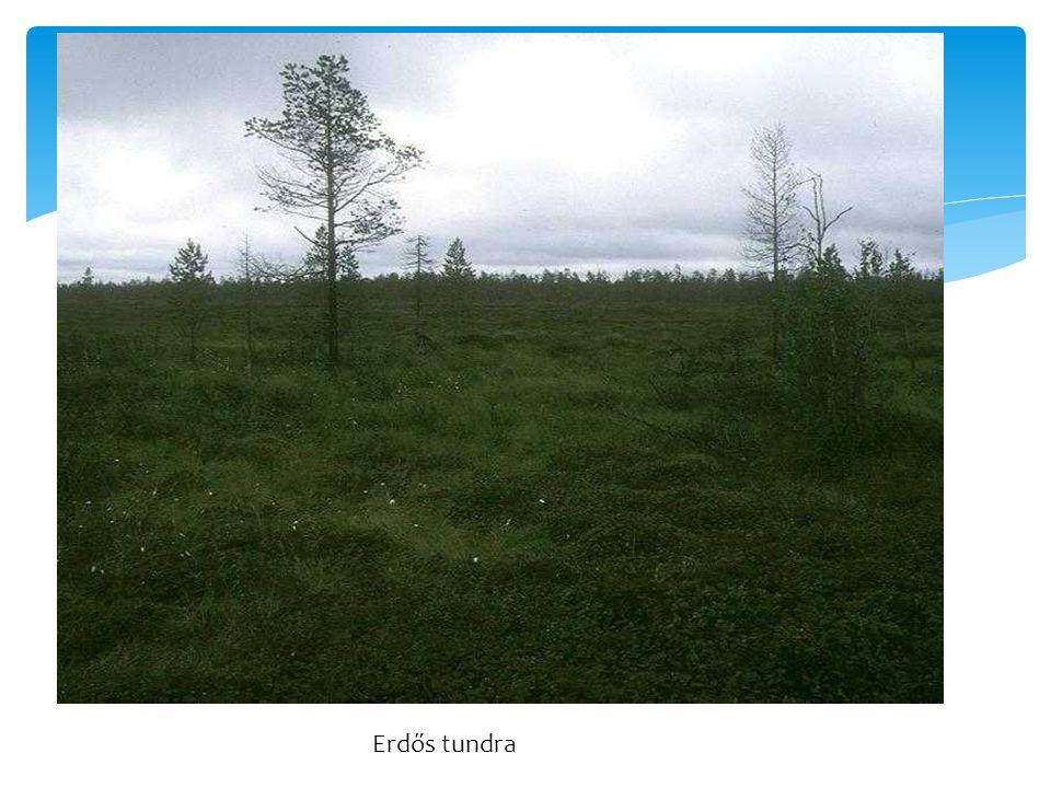 Erdős tundra