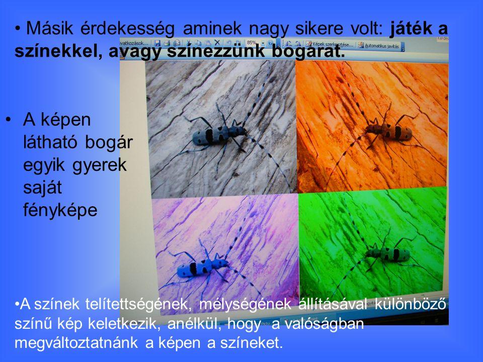 A képen látható bogár egyik gyerek saját fényképe Másik érdekesség aminek nagy sikere volt: játék a színekkel, avagy színezzünk bogarat.