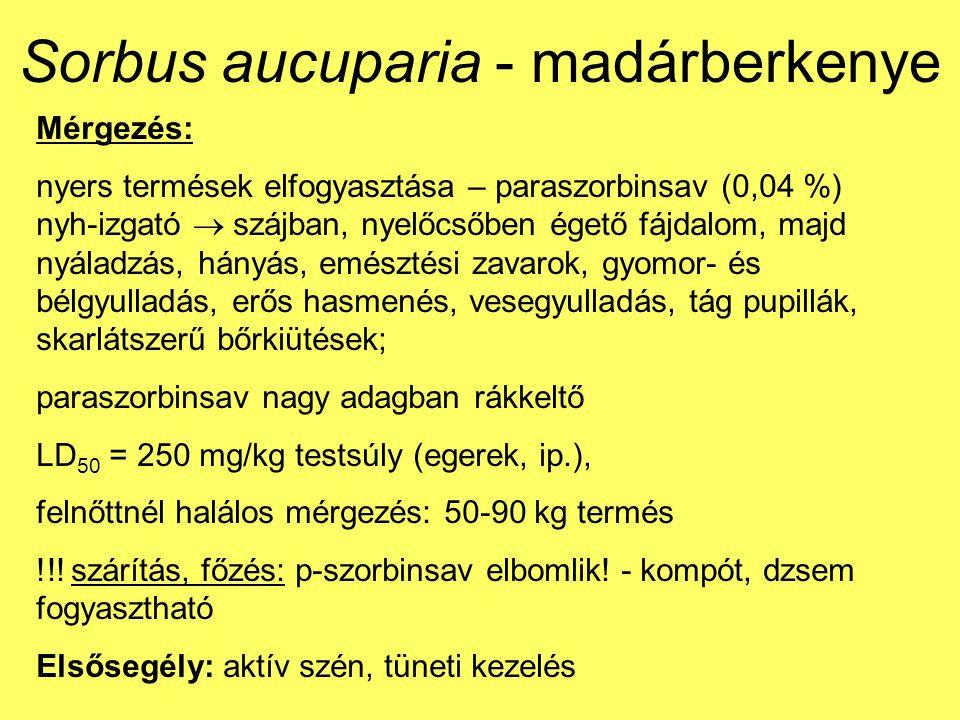 Sorbus aucuparia - madárberkenye Mérgezés: nyers termések elfogyasztása – paraszorbinsav (0,04 %) nyh-izgató  szájban, nyelőcsőben égető fájdalom, majd nyáladzás, hányás, emésztési zavarok, gyomor- és bélgyulladás, erős hasmenés, vesegyulladás, tág pupillák, skarlátszerű bőrkiütések; paraszorbinsav nagy adagban rákkeltő LD 50 = 250 mg/kg testsúly (egerek, ip.), felnőttnél halálos mérgezés: 50-90 kg termés !!.
