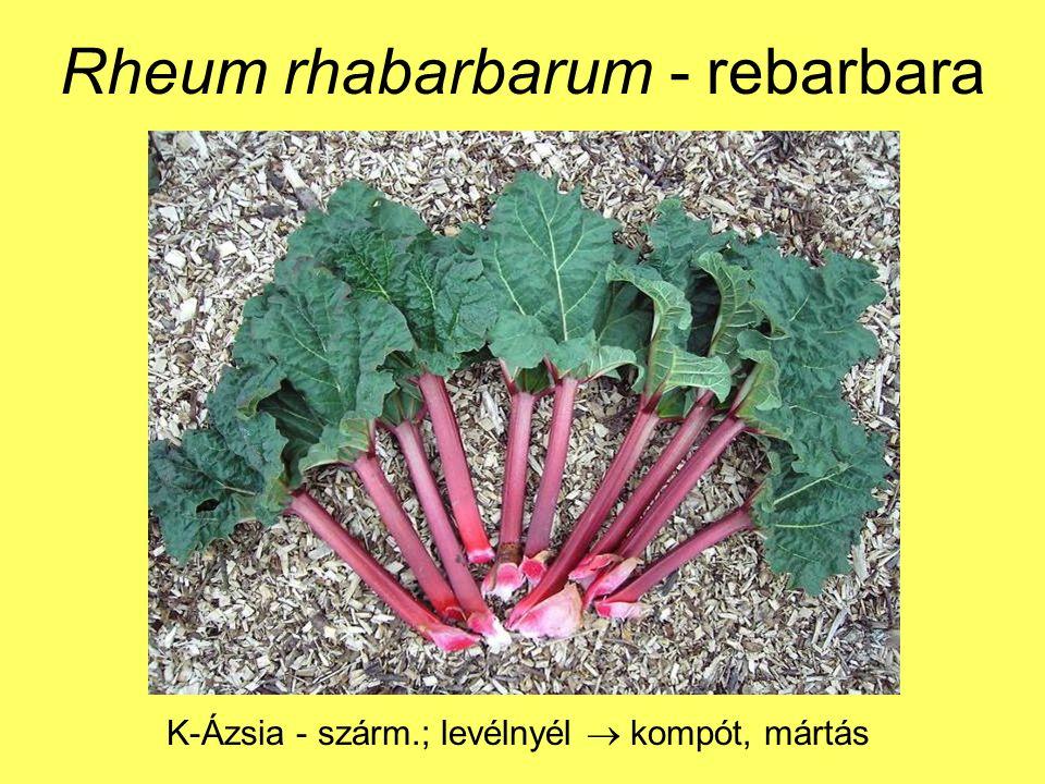 Rheum rhabarbarum - rebarbara K-Ázsia - szárm.; levélnyél  kompót, mártás