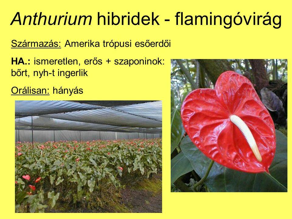 Anthurium hibridek - flamingóvirág Származás: Amerika trópusi esőerdői HA.: ismeretlen, erős + szaponinok: bőrt, nyh-t ingerlik Orálisan: hányás