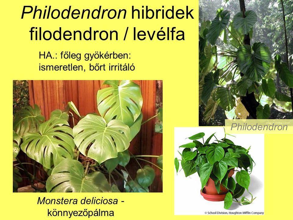 Philodendron hibridek filodendron / levélfa Monstera deliciosa - könnyezőpálma HA.: főleg gyökérben: ismeretlen, bőrt irritáló Philodendron