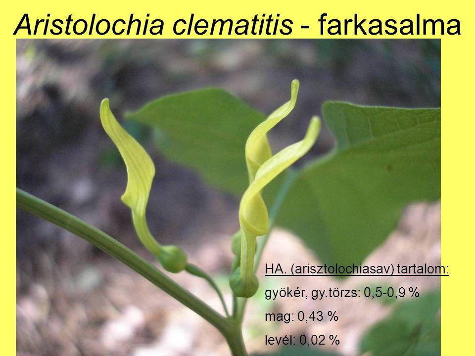 HA.: anemonin, protoanemonin Hasonló hatású, mint a berki szellőrózsa.