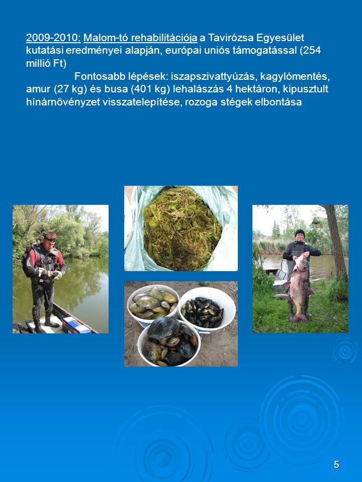 5 2009-2010: Malom-tó rehabilitációja a Tavirózsa Egyesület kutatási eredményei alapján, európai uniós támogatással (254 millió Ft) Fontosabb lépések: iszapszivattyúzás, kagylómentés, amur (27 kg) és busa (401 kg) lehalászás 4 hektáron, kipusztult hínárnövényzet visszatelepítése, rozoga stégek elbontása