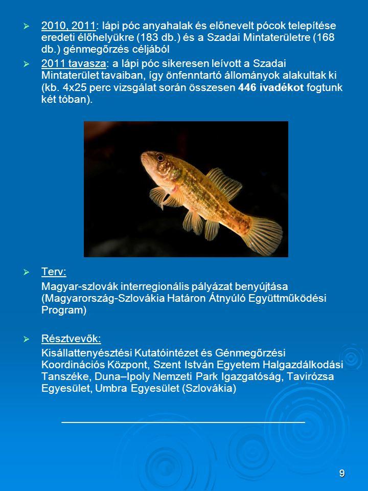 9   2010, 2011: lápi póc anyahalak és előnevelt pócok telepítése eredeti élőhelyükre (183 db.) és a Szadai Mintaterületre (168 db.) génmegőrzés célj