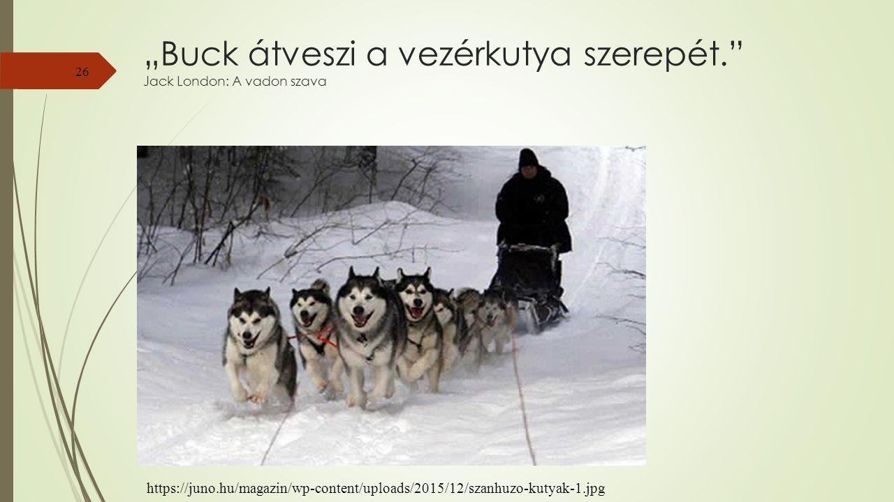 """""""Buck átveszi a vezérkutya szerepét. Jack London: A vadon szava 26 https://juno.hu/magazin/wp-content/uploads/2015/12/szanhuzo-kutyak-1.jpg"""
